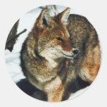 Coyote en nieve pegatinas redondas
