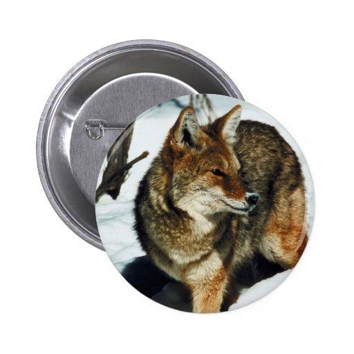 Coyote en nieve pins