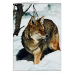 Coyote en nieve tarjeton