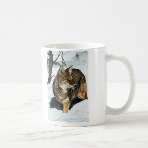 Coyote en nieve taza