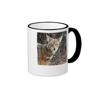 coyote en Parque Griffith 005, coyote en griffith… Taza De Dos Colores