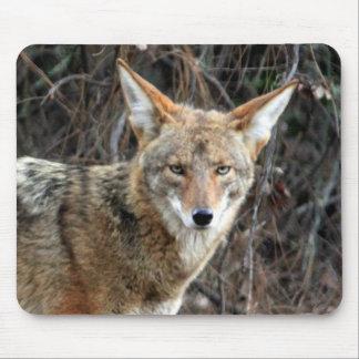 coyote en Parque Griffith 005 Alfombrilla De Ratón