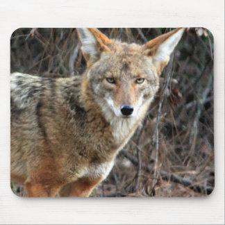 coyote en Parque Griffith 005 Tapetes De Ratón