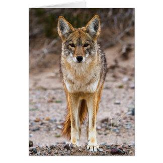 Coyote Encounter Card