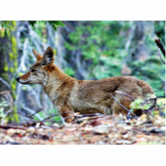 Coyote Escultura Fotográfica