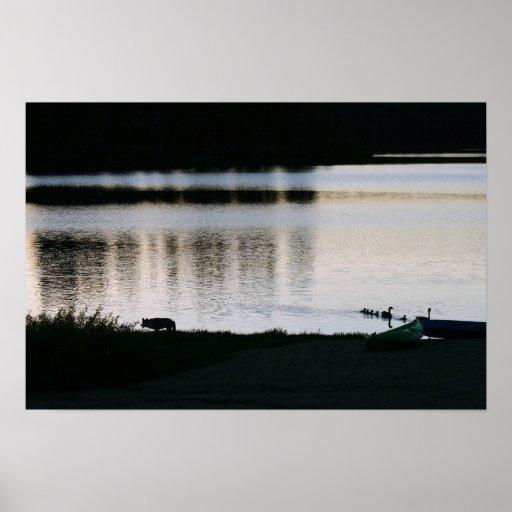 """Coyote, familia de gansos, """"faltando el barco """" póster"""