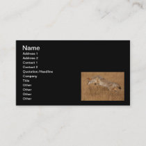 Coyote Flying Business Card