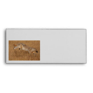 Coyote Flying Envelopes