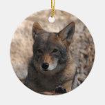 Coyote hermoso adorno redondo de cerámica