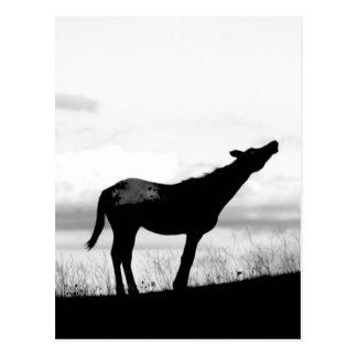 coyote horse postcard