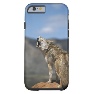 Coyote Howling From High Point Tough iPhone 6 Case