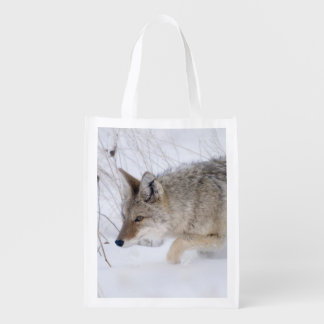 Coyote hunting in snow in Grand Tetons NP Grocery Bags