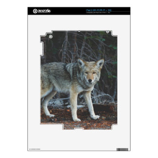 Coyote Hunting Skins For iPad 2
