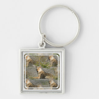 Coyote Images Keychain
