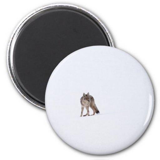 Coyote Imán Redondo 5 Cm