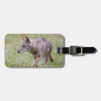 Coyote in field, Cades Cove Bag Tag