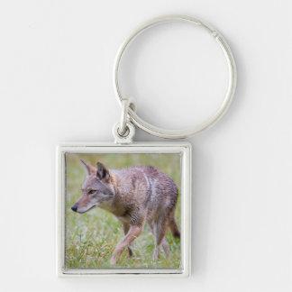 Coyote in field, Cades Cove Silver-Colored Square Keychain