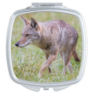 Coyote in field, Cades Cove Makeup Mirror