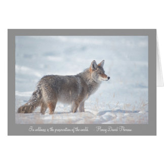 Coyote in Snow Card