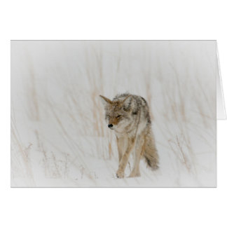 Coyote in snowstorm greeting card