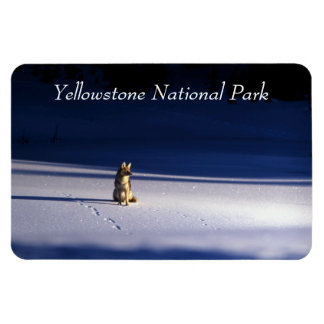 Coyote in the Snow Rectangular Photo Magnet