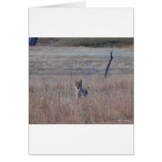 Coyote in Wind Cave National Park, South Dakota Greeting Cards