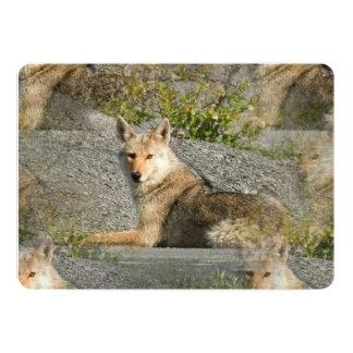 """Coyote Invitación 5"""" X 7"""""""