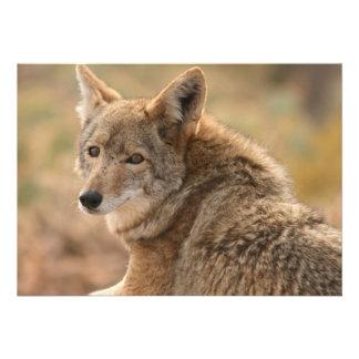 Coyote Invitation