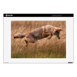 """Coyote Leaping - Gibbon Meadows Decal For 15"""" Laptop"""
