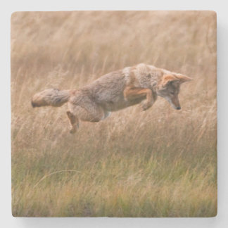 Coyote Leaping - Gibbon Meadows Stone Coaster