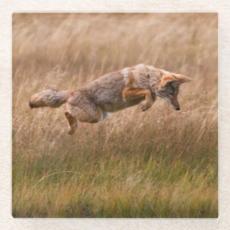 Coyote Leaping - Gibbon Meadows Glass Coaster