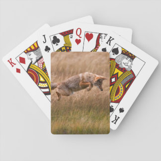 Coyote Leaping - Gibbon Meadows Poker Cards