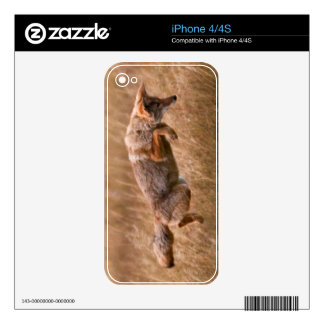 Coyote Leaping - Gibbon Meadows iPhone 4 Decals