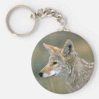 Coyote Llavero