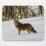 Coyote Mousepad