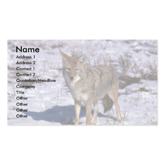 Coyote on snow business card
