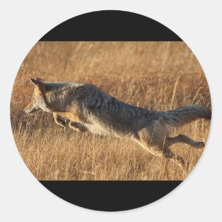 coyote etiqueta redonda