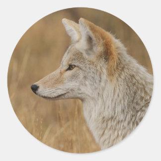 coyote pegatina redonda