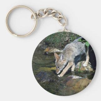 Coyote-perrito al lado de la corriente del verano llavero