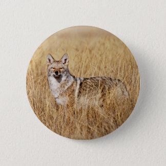 Coyote Photograph Button