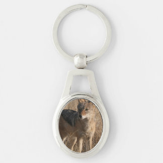 Coyote Keychains