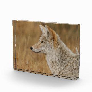 Coyote Portrait Award