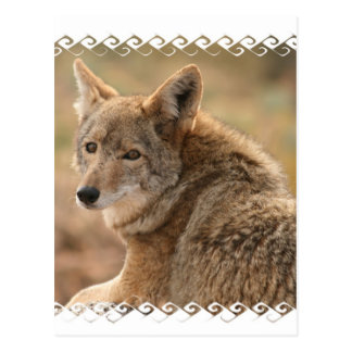 Coyote Postcard