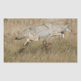 Coyote Pouncing Caught in Mid Pounce Rectangular Sticker