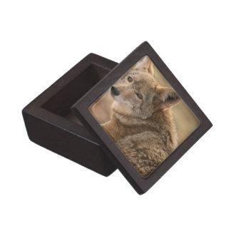 Coyote Premium Gift Box