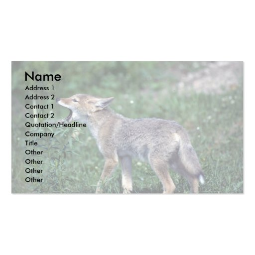 Coyote-pup howling in summer meadow Double-Sided standard business cards (Pack of 100)