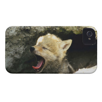 Coyote pup yawning Case-Mate iPhone 4 case