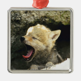 Coyote pup yawning christmas tree ornaments