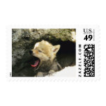 Coyote pup yawning postage stamp