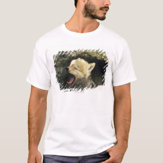 Coyote pup yawning T-Shirt